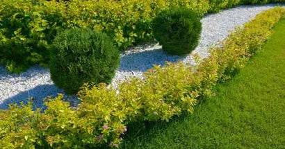 seeded fescue lawn