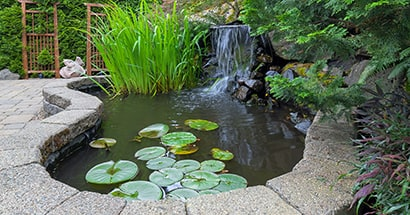 fountain and pond water feature